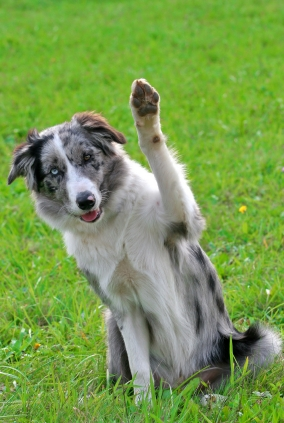 picture of dog waving